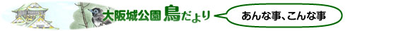 大阪城公園鳥だより あんな事、こんな事